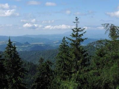 Widok z wieży na Radyiejowej
