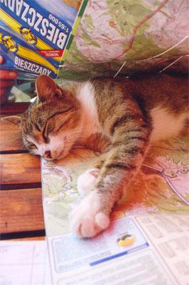 Ta mapa była doskonała ... do spania! Fot. Anna Gawryś