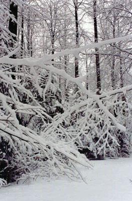 Świętokrzyski las zimą. Fot. A. Gawryś.