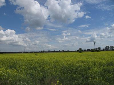 Mazowieckie pola niedaleko Brochowa. Fot. J. Gaczyńska.