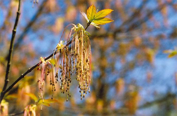 Wiosna w błękicie. Fot. Anna Gawryś.