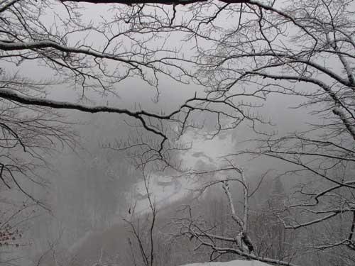 Mgła w dolinie Prądnika. Fot. J. Gaczyńska.